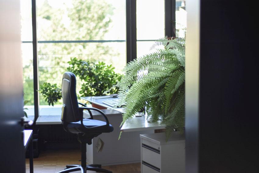 Plantas naturales en la oficina beneficios y especies m s for Plantas decorativas para oficina