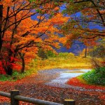 Fall Colors! Enjoy an Autumn Forest Drive in Wisconsin