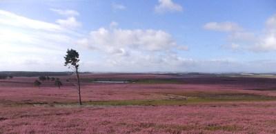 Greenlaw Moor