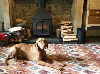 AB Living Room dog