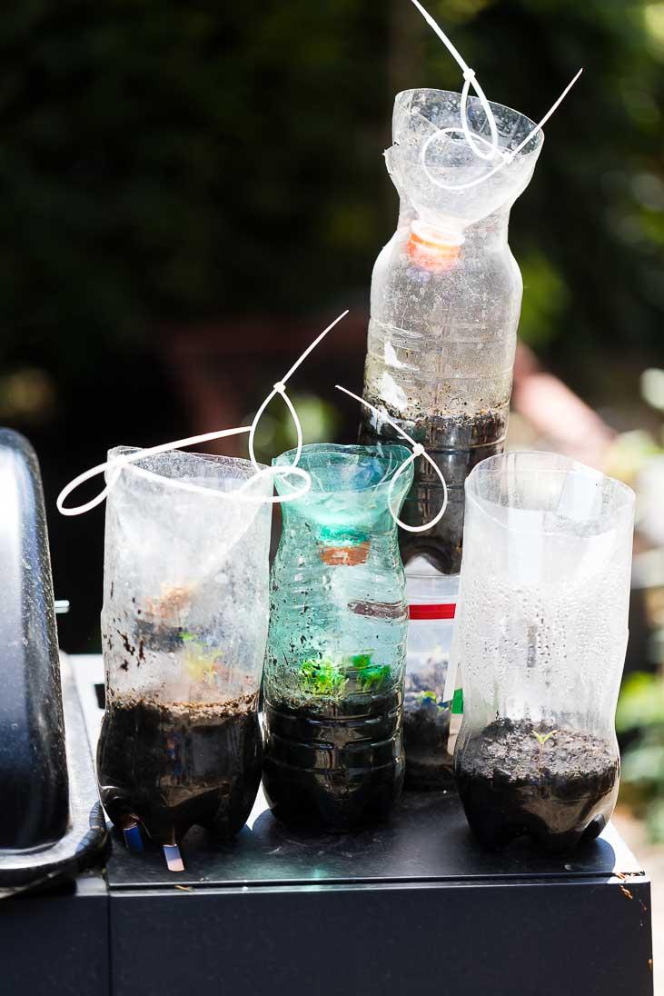 DIY upcycling Plastikflaschen Glashaus Gewächshaus