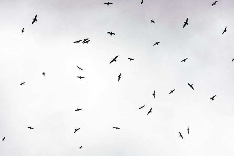 schwarzweiss_schwarm