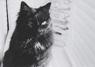 Petri F 1.9 cat