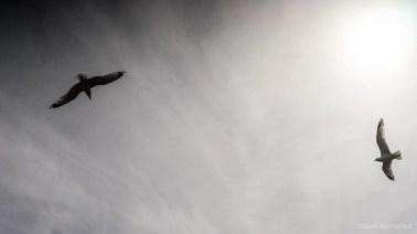 Zeiss Planar 50mm 1.4 c-y mount review-13