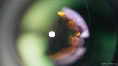 minolta a7 100mm macro lens product photos-4