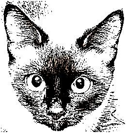 How To Draw A Cat: Resources And References
