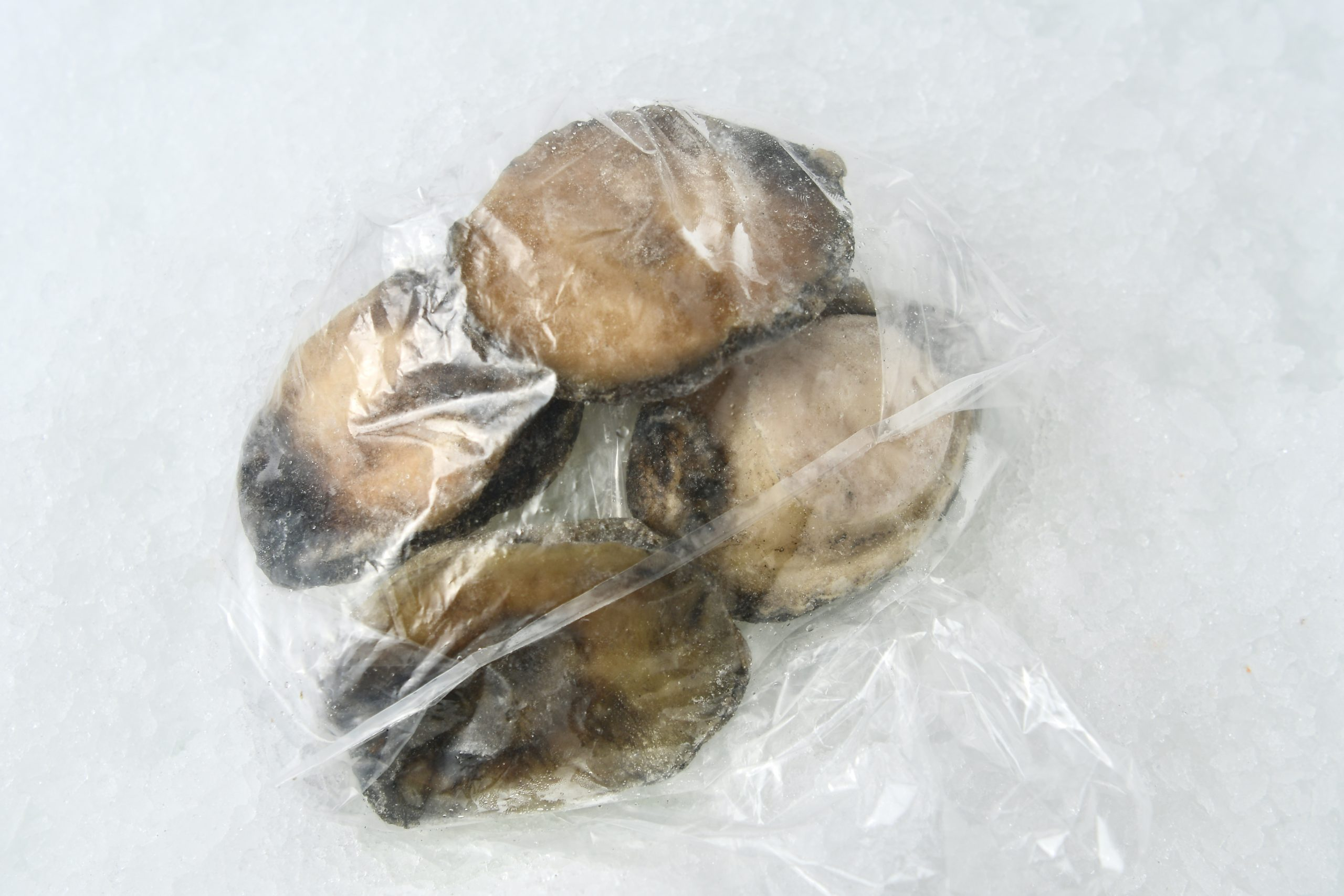 Abalone. Wild Large Meat - Catalina OP