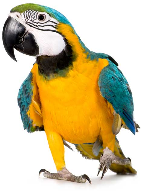 Venta de alimentos y accesorios para pájaros.