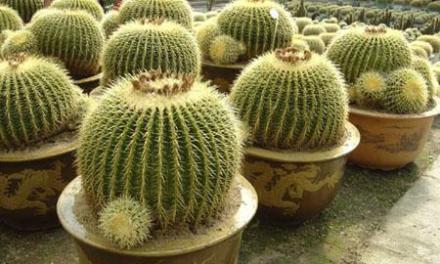 Planta del mes de Junio: Cactus y Plantas Crasas con un 10% de descuento.