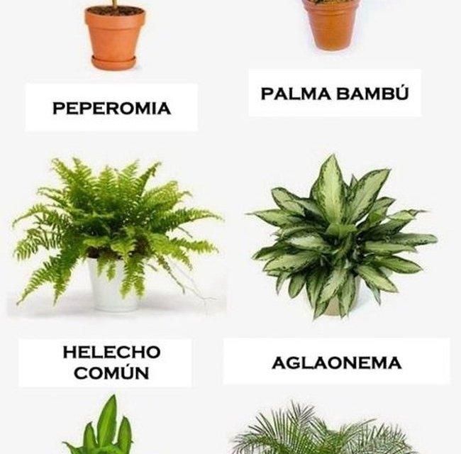 10 plantas que purifican el aire de tu hogar (infografía)