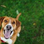 Maneras de educar a tu perro con la comida