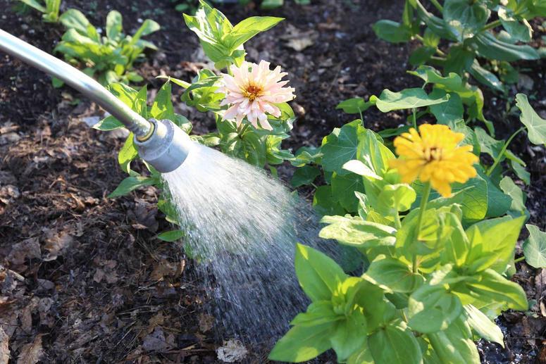 com-evitar-plantes-malmetin-calor-estiu