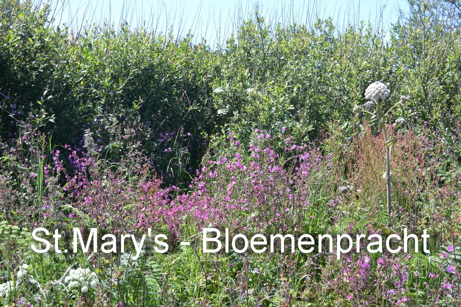 St.Mary's - Bloemen6