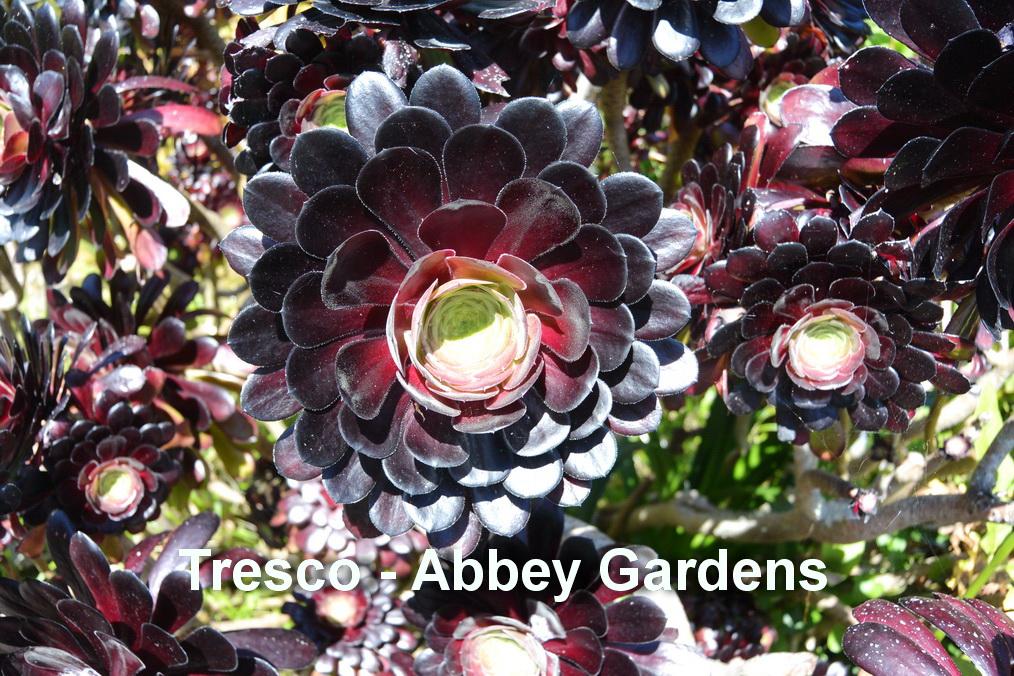 Tresco - Abbey gardens8
