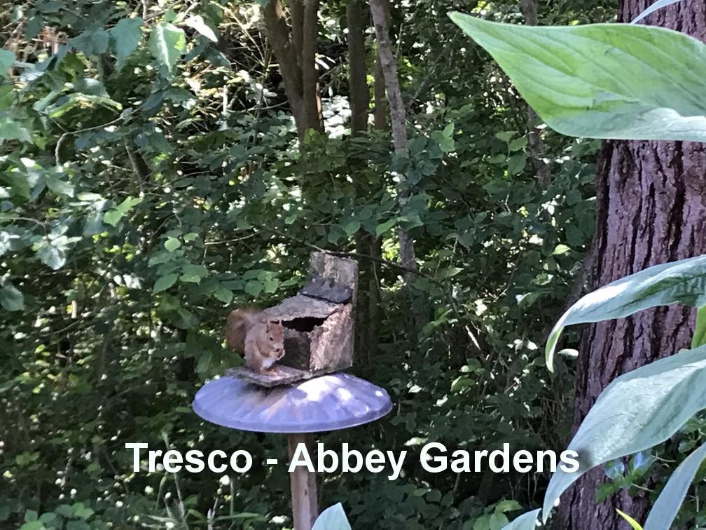 Tresco - Eekhoorn2