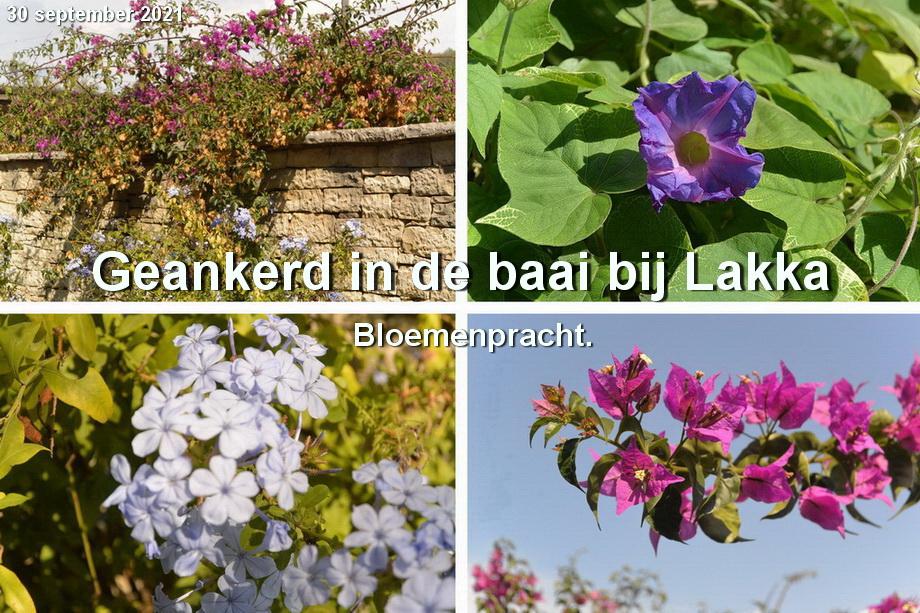 Lakka_bloemen