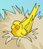 Birdie POV