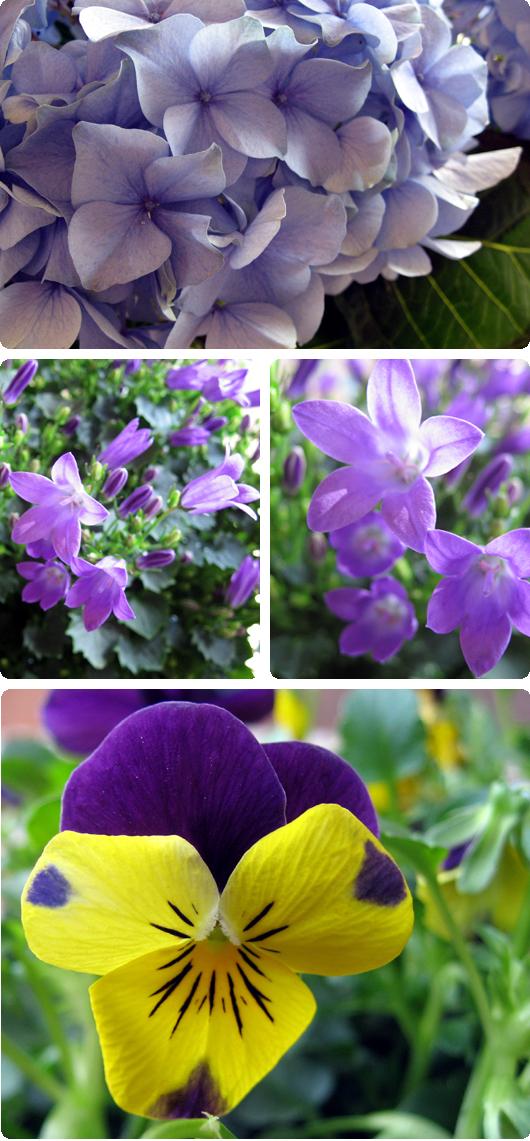 blomster1.jpg