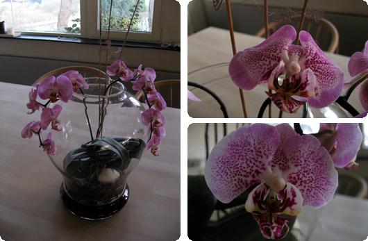 orkide.jpg