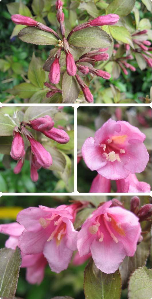 blomst1.jpg