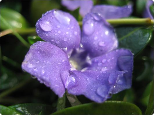regn1.jpg