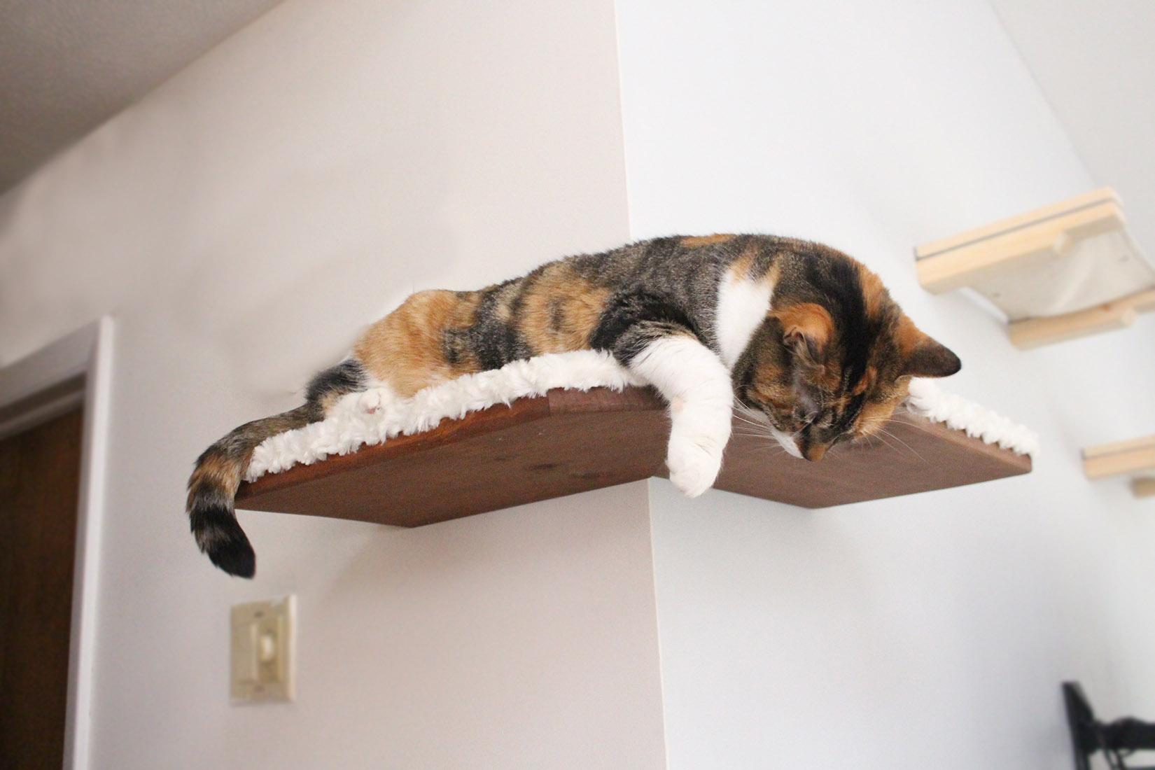 Fabriccovered Corner Cat Shelf  Catastrophic Creations