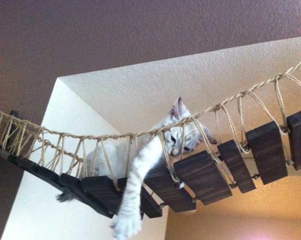 Indiana Jones Cat Bridge  Catastrophic Creations