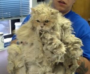 cat pelts 9