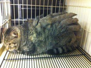pelt cat 1