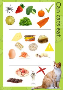 Can cats eat that infographic