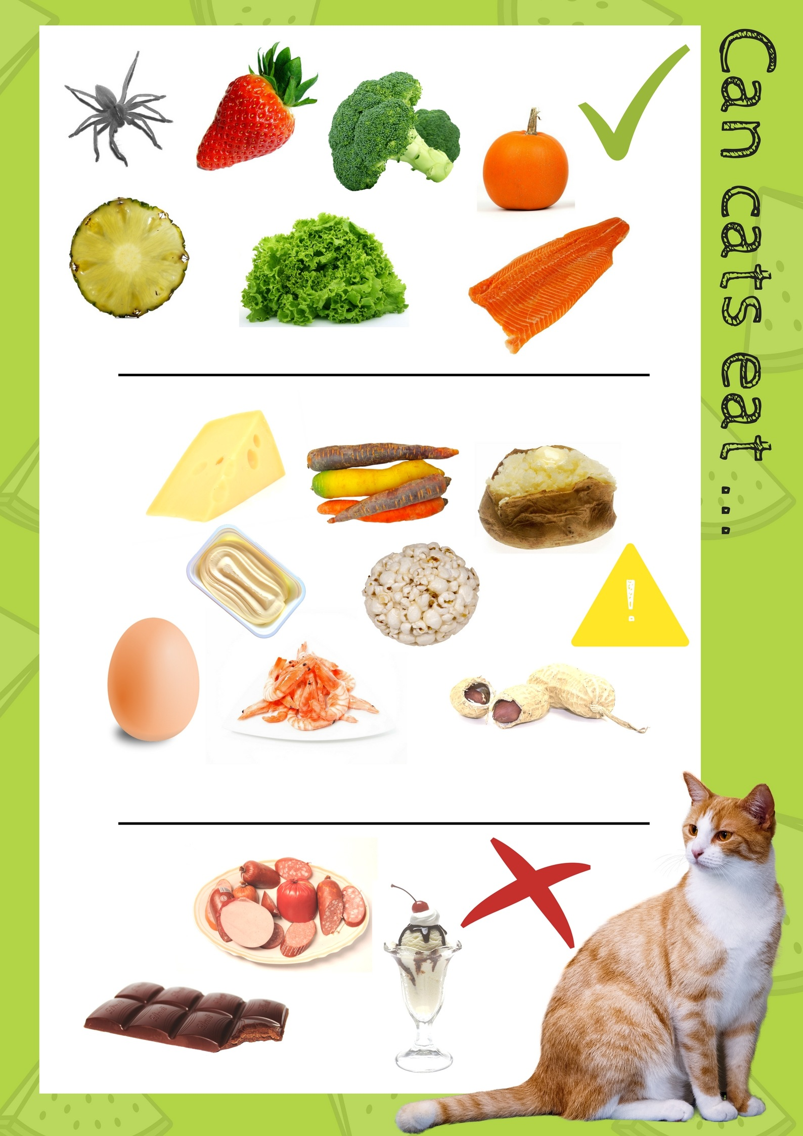 What Human Foods Can Dogs And Cats Eat