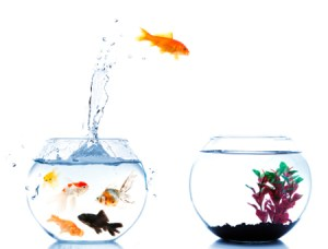 Fish jumping into new bowl