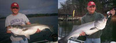 Lake Lanier Stripers