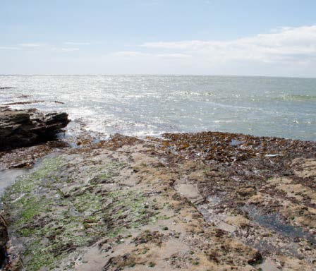 The shore at Hook Head where the combined inputs of the three large estuaries join the open coastal waters Photo: Robert Wilkes
