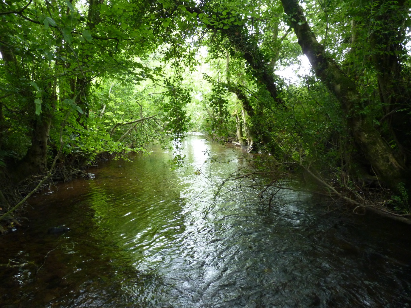 Natural stream channel in a tributary near the Suir headwaters (Photo E. Quinlan)
