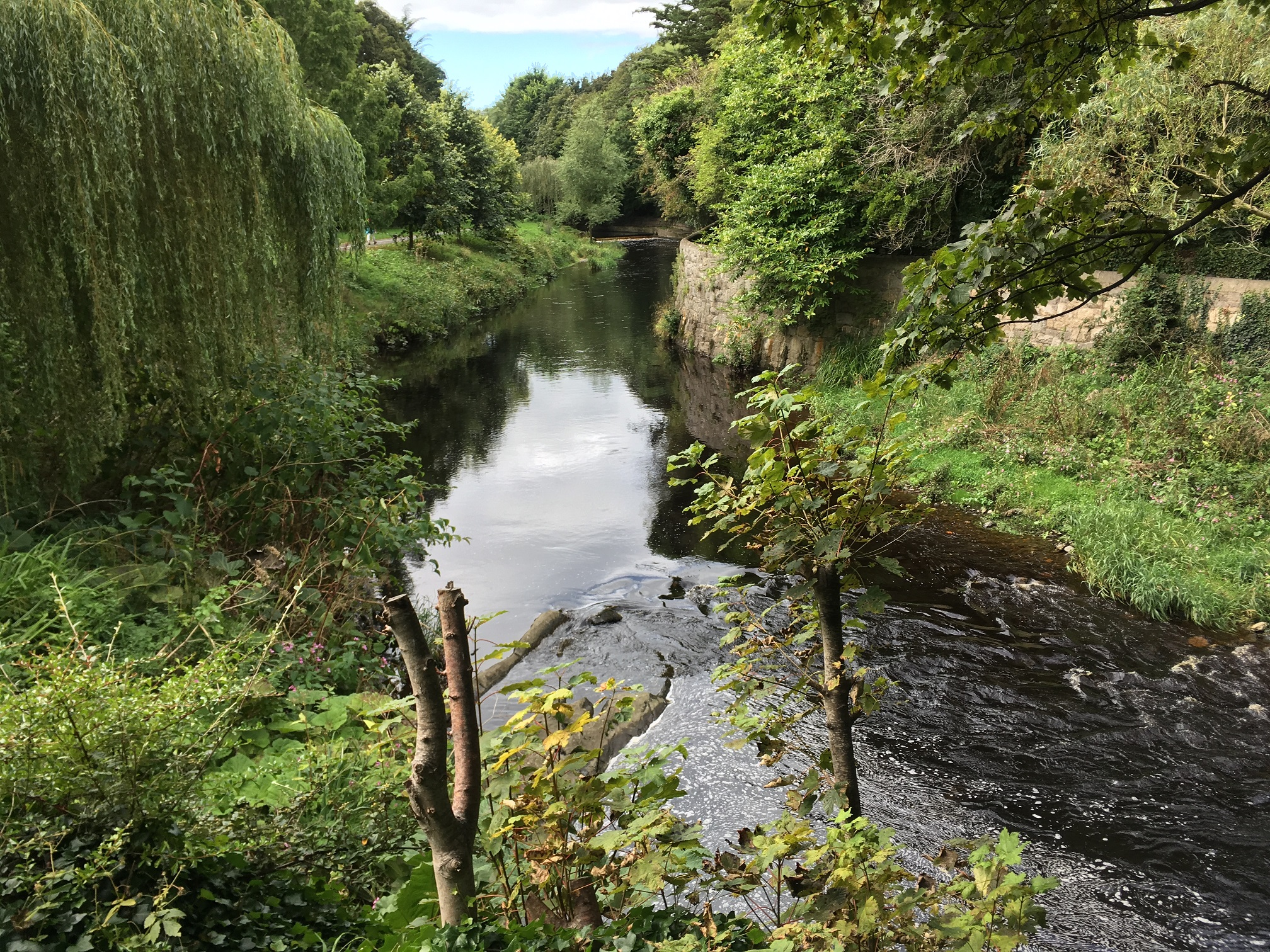 The Dodder (Photo Paddy Morris)