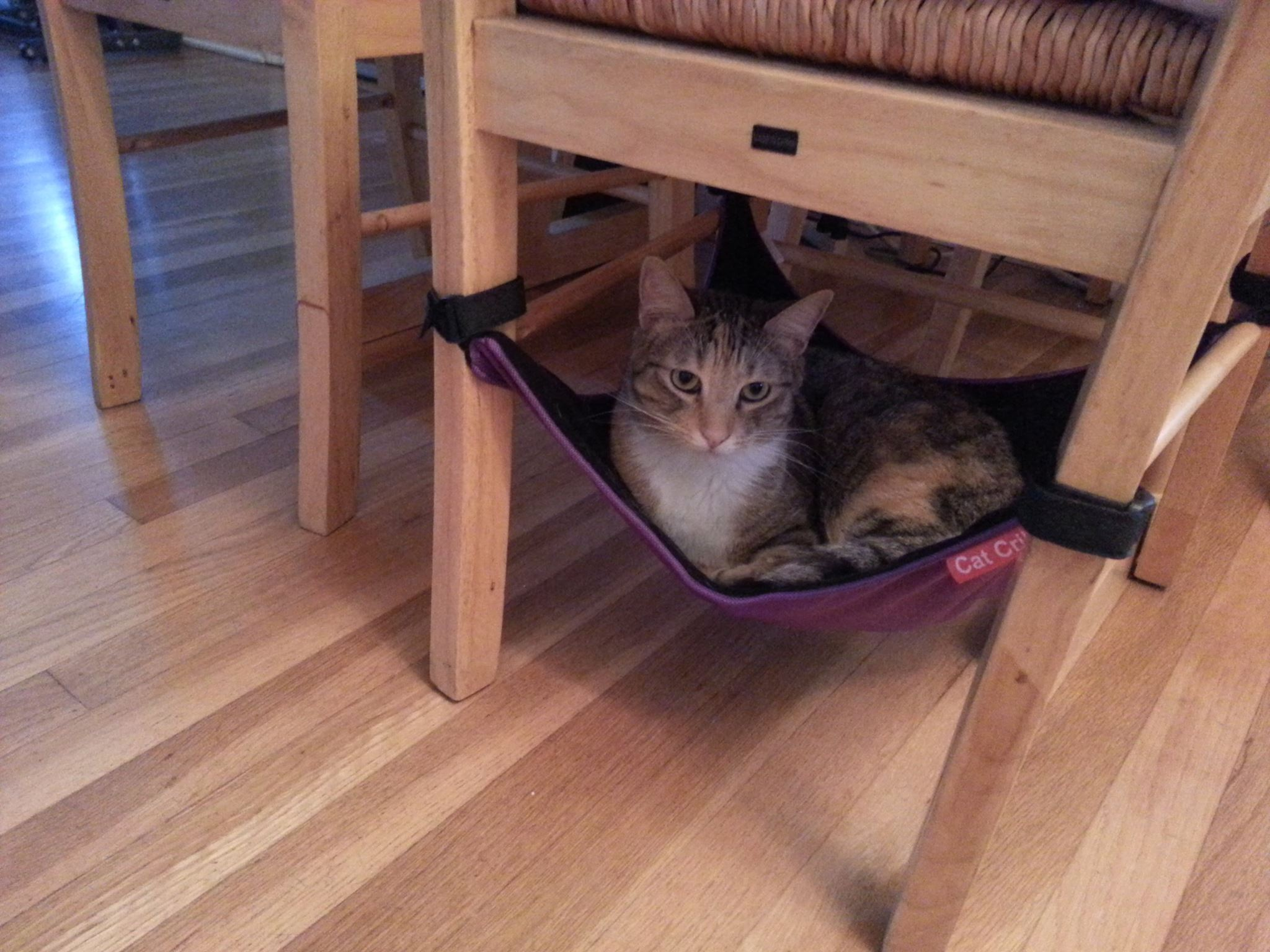 cat hammock under chair cool outdoor chairs crib the best bed for your kitties to