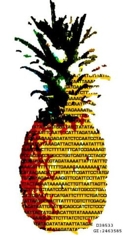 DNA Art Pineapple