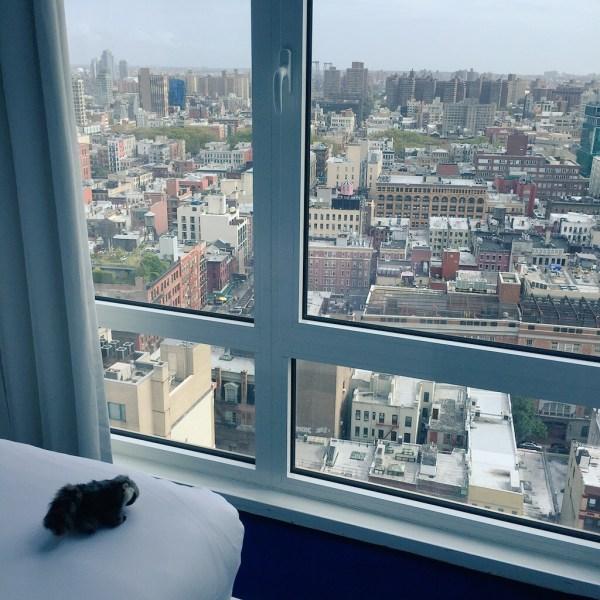 Tiny Raccoon contemplates Manhattan