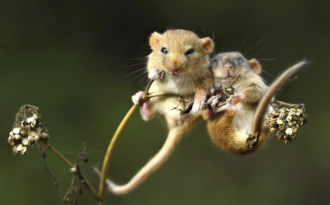 Say cheese Adorable moment two tiny mice are spotted cuddling before bedtime  Caters News Agency