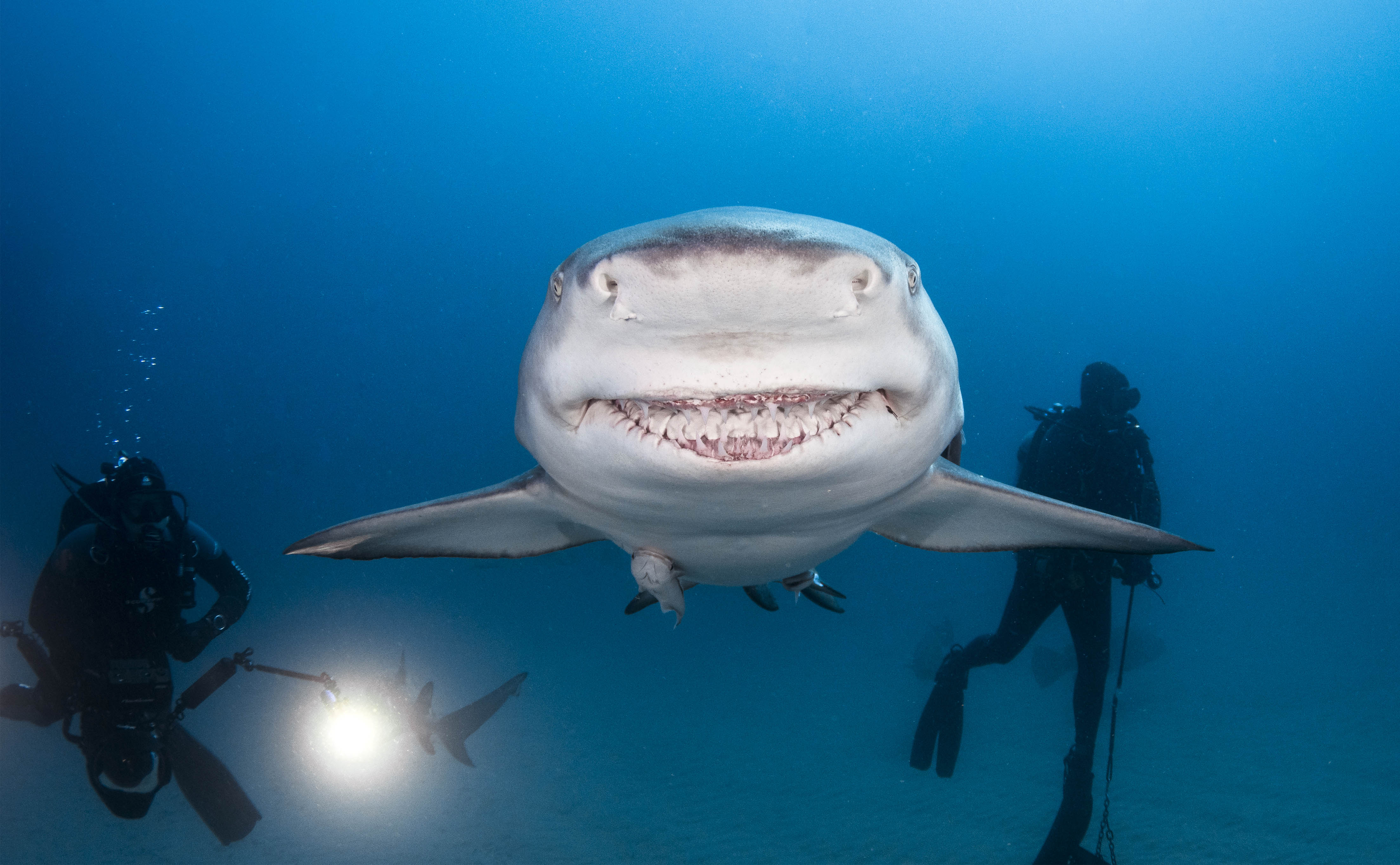 Great White Shark Wallpaper Cute Say Cheeese The Jaw Some Moment Shark Gives Camera His