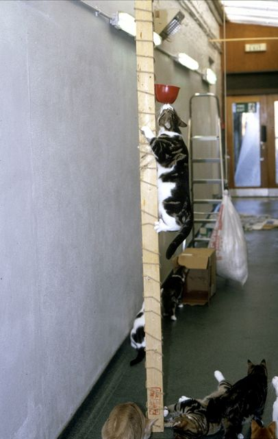 HOW TO HAVE A HAPPY INDOOR CAT environmental enrichment