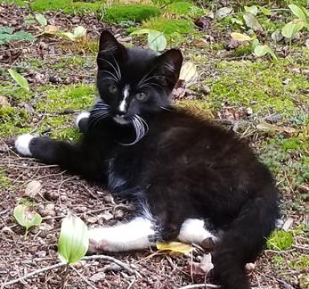 cat finders blog archive