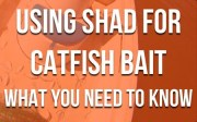 Shad For Catfish Bait: The Essential Guide To Catfishing With Shad