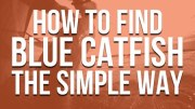 Find Blue Catfish The Simple Way (They're a Lot Like Teenage Boys)