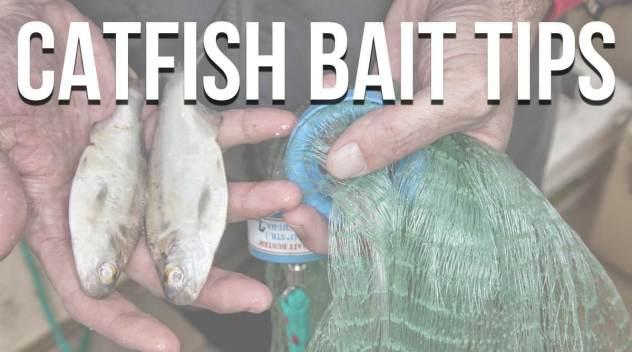 Catfish Bait Tips