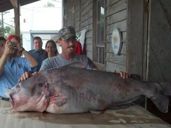 World Record Catfish, The Largest Catfish Ever Caught
