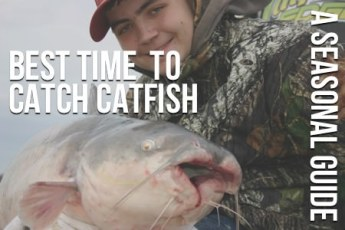 The Best Time To Catch Catfish: Seasonal Guide