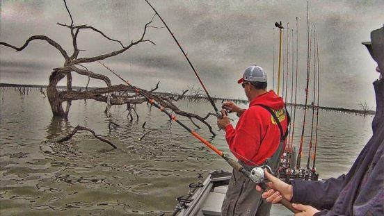 Splat Fishing Catfish Cormorant Catfishing