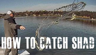 How To Catch Shad